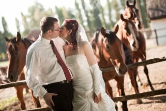 wedding_in_the_farm